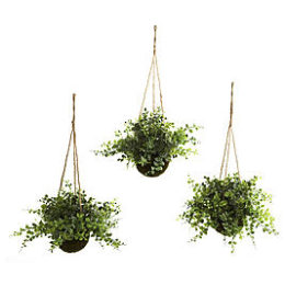 Sears – Eucalyptus Maiden Hair and Berry Hanging Basket Set of Three Only $28.86 (Reg $49.99) + Free Store Pickup