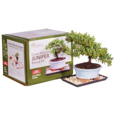 Walmart – Brussel's Green Mound Juniper Bonsai Kit (Outdoor) Only $39.00 (Reg $46.97) + Free 2-Day Shipping