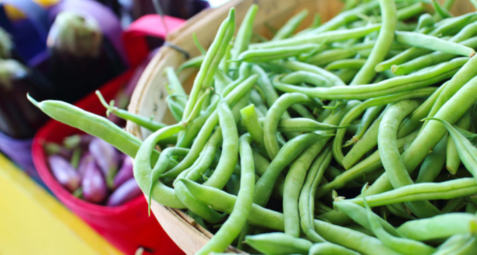 Free Tasty Bite Organic Green Bean Seeds – 1st 1,000 Daily