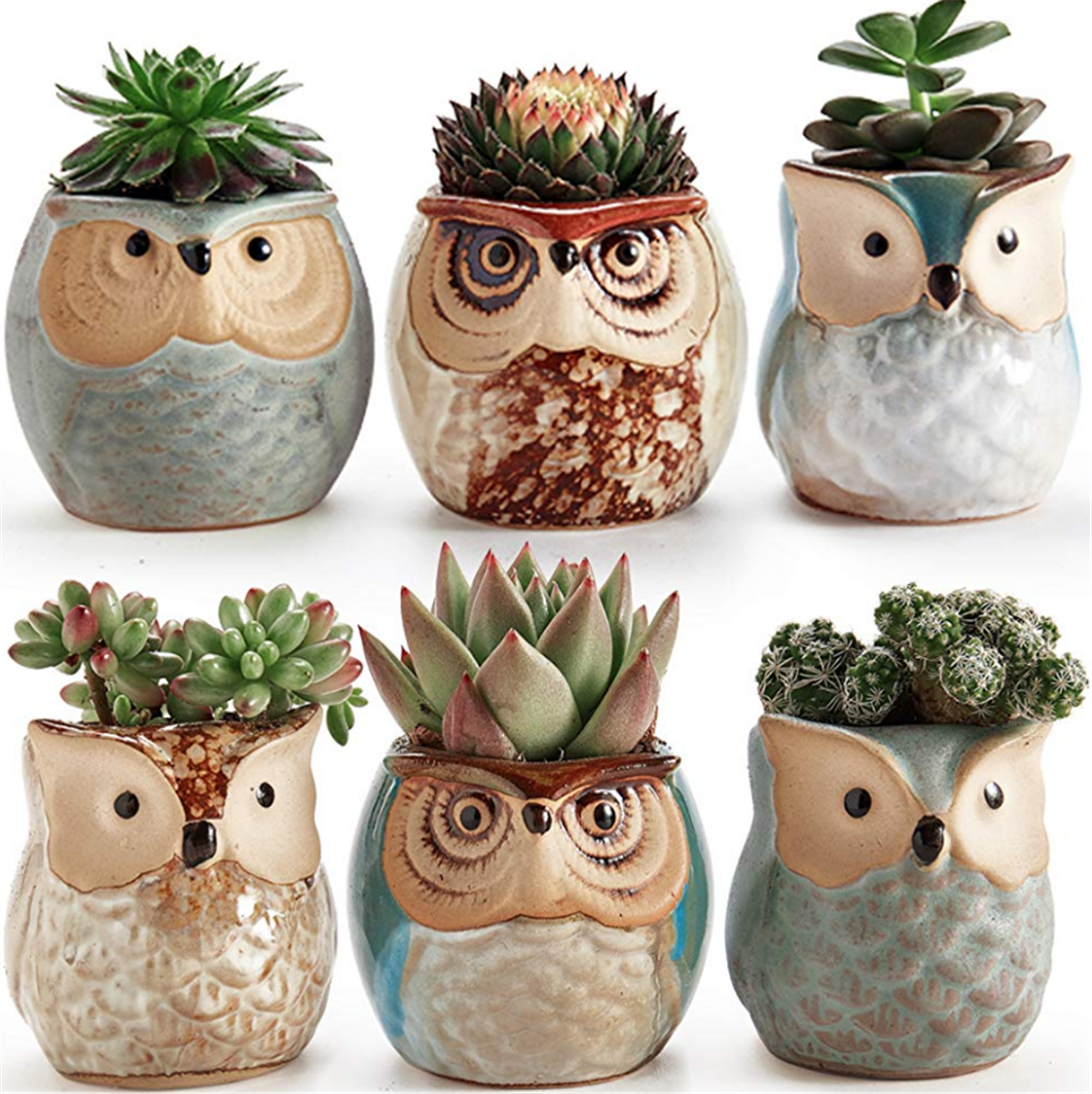 Amazon – Set of 6 Owl Flower Pots For Succulents Only $14.99! Plus Receive Two Succulents a Month For $8.00 Shipped!