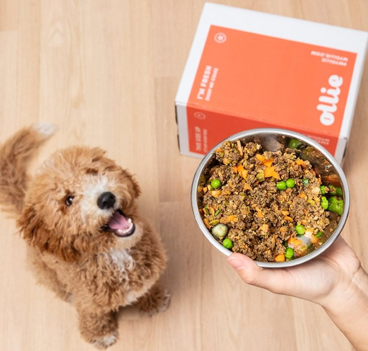 50% Off Ollie High Quality Dog Food Delivered Right To Your Door + Free Shipping!